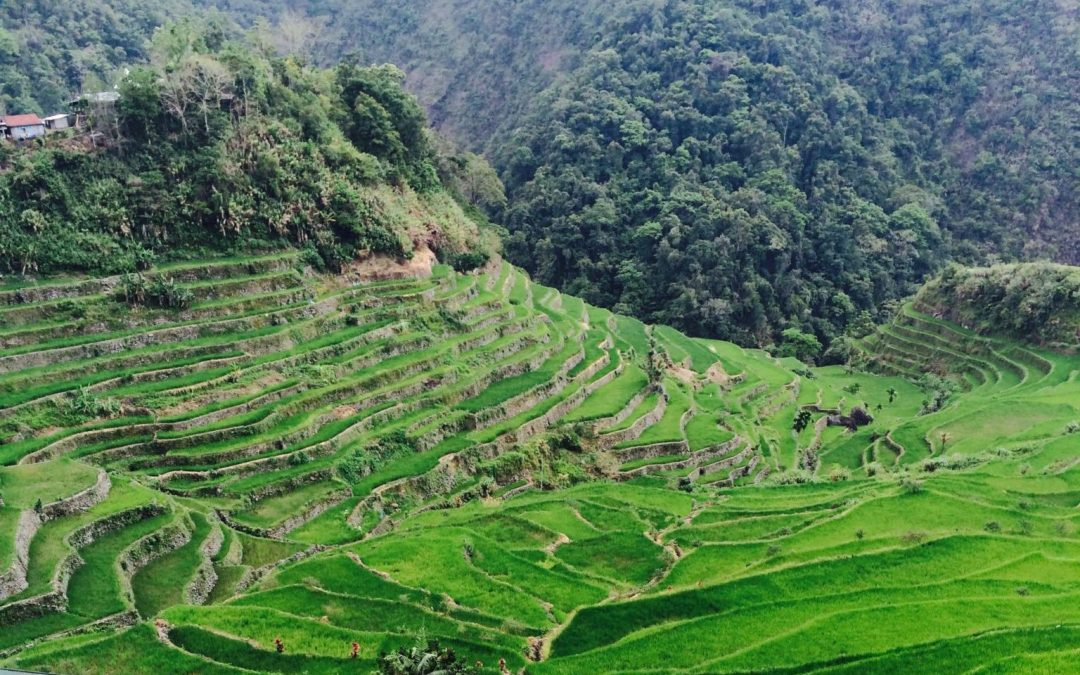 Batad Rice Terraces and Tappiya Falls: 2020 Ultimate Travel Guide