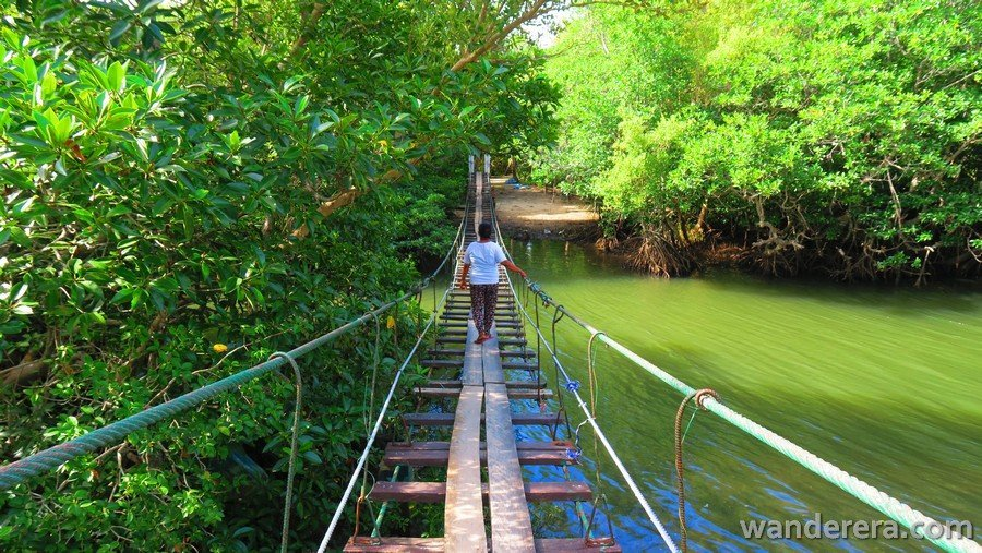 Hanging Bridge in Palaui