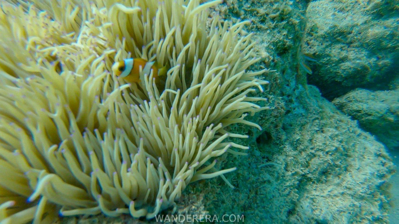 Tulapos Marine Sanctuary-11