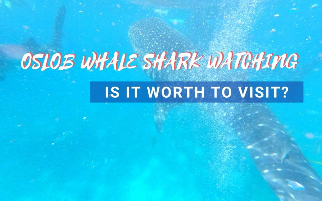 oslob whale watching