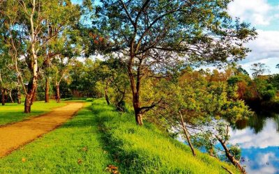 4 Captivating and Comforting Picnic Spots on the Central Coast, NSW