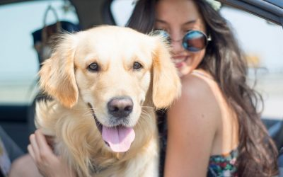 Tips on How to Travel Better with Your Dog