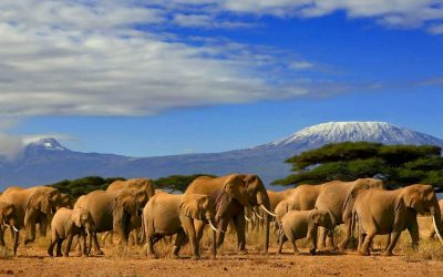 Kenya Travel Guide for the First-Time Visitors