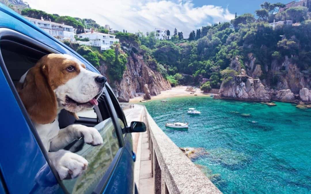 5 Life Hacks for Traveling with Your Dog