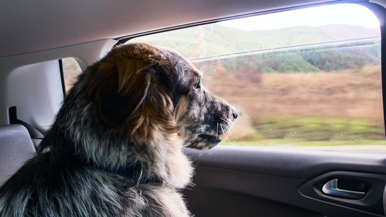 How to travel with a big dog